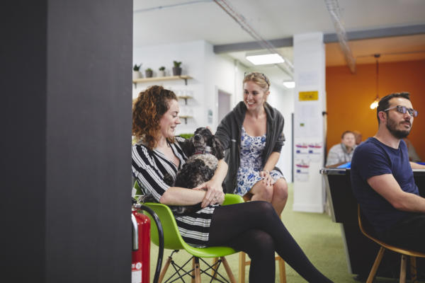 Crowdcube Exeter HQ, office dogs